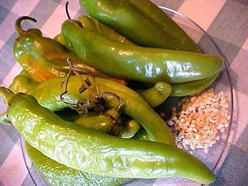 Shoopy Star 100 Pcs Straw Noir: Tous les fruits Qualità des semences semences jardin Balcon Bonsai Plantes d'arbres