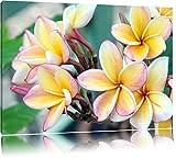Monoi Blüten auf Hawaii Format: 120x80 auf Leinwand, XXL riesige Bilder fertig gerahmt mit Keilrahmen, Kunstdruck auf Wandbild mit Rahmen, günstiger als Gemälde oder Ölbild, kein Poster oder Plakat