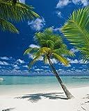 Komar Fototapete Motivtapete Bildtapete Ari Atoll Malediven Palmenstrand Südsee Meer Palmen Strandbild - Wall Mural 4-Teilig - Größe 184 x 254 cm