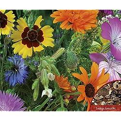 Bobby-Seeds Blumensamen Wildblumen- und Kräuterwiese, Mischung Portion