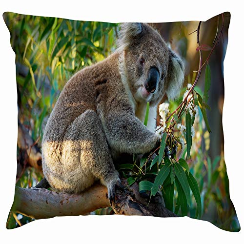 scolarctos Cinereus On Tree Australia Animals Wildlife Throw Pillows Covers Accent Home Sofa Cushion Cover Pillowcase Gift Decorative 18X18 Inch ()