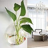 TONGXU Appeso a Parete in Vetro da Appendere Vaso fioriera Bubble pianta Contenitore (Diametro 26 cm)