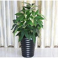 Planta de flores falsas, árboles falsos de la sala de estar, planta grande floral