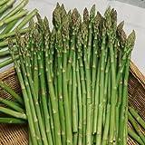 PLAT FIRM SEMI PLAT semi firm-100 pezzi di asparagi inferiori pressur, frutta e verdura, semi Bonsai piante Semi per la casa e giardino