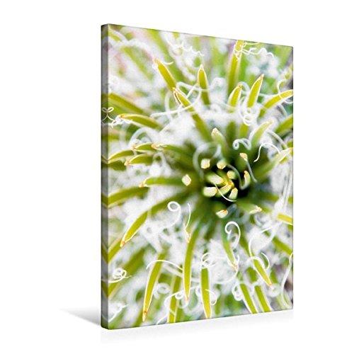 Premium Textil-Leinwand 50 cm x 75 cm hoch, Stachelig aber wunderschön - Nahaufnahme eines Kaktus | Wandbild, Bild auf Keilrahmen, Fertigbild auf echter Leinwand, Leinwanddruck (CALVENDO Natur)
