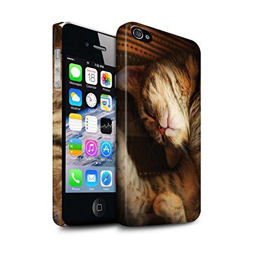 Officiel Elena Dudina Coque / Clipser Matte Etui pour Apple iPhone 4/4S / Petit Panda/Bambou Design / Les Animaux Collection Endormi/Tigré Chat