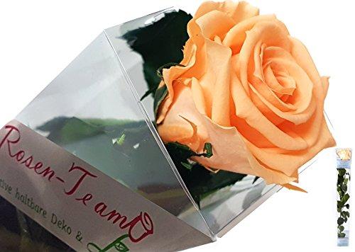 rose-te-amo-konservierte-di-rose-e-un-vero-e-proprio-rose-halt-bare-di-fiore-conosciuto-anche-come-l