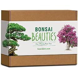 Bonsaï Beauties Kit de graines Tout ce dont vous avez besoin pour faire pousser 5 superbes variétés d'arbres à bonsaï.