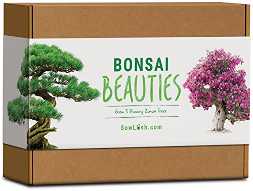 Bonsai Beauties Geschenk-Samenset. Everything You Need to Grow Bonsai-Bäume in 5 atemberaubenden Sorten