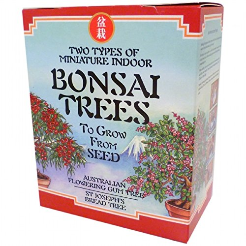 bonsai-tree-kit-red-version-bread-tree-and-australian-flowering-gum