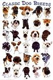 Poster 'Hunderassen', Größe: 61 x 91 cm