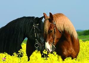 Veloflex 4650044 Sous-main Motif chevaux 35 x 50 cm (Import Allemagne)
