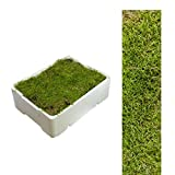 1 Kiste Plattenmoos ca 2,00 - 2,50 kg Polstermoos naturgrün