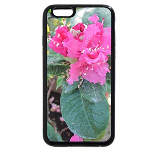 iPhone 6S / iPhone 6 Case (Black) Spring Blooms 17