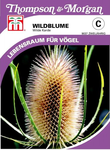 Thompson & Morgan Wildblume die Wilde Karde NEU