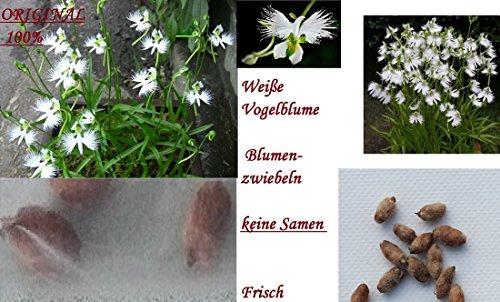 Samenhandel Ipsa Import und Handel Pflanze Samen Blumen