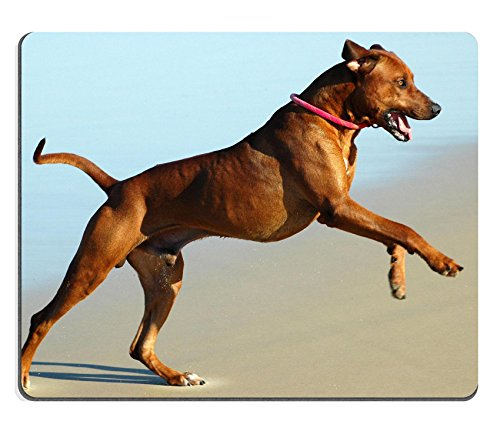 Liili mouse pad Natural rubber Mousepad Image ID: 1447941 a beautiful Active African male Rhodesian Ridgeback Hound Dog with Happy Expression in the Face Playing Wild by Jumping and running Fast in TH