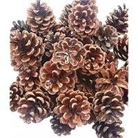 Piñas Naturales para Decoración Navideña - 500 gr (25 Unidades)