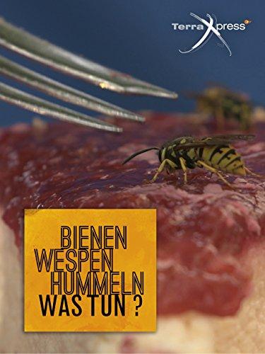 bienen-wespen-hummeln-was-tun