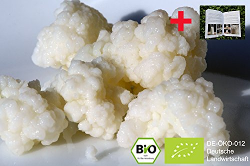 Original Bio Kefir/ Milchkefir Getränk mit aktiven Kefirknollen für zunächst 250ml Kefir-Getränk...