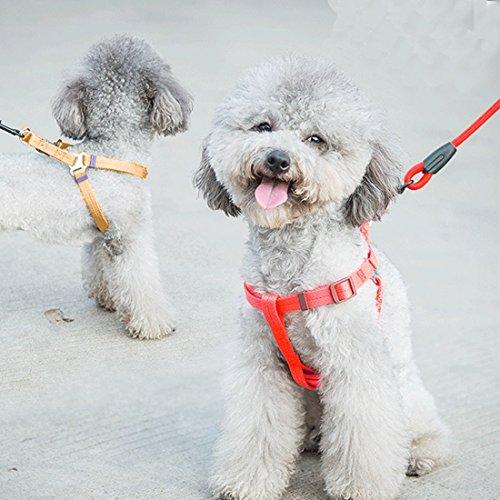 Jdon-pet, Collar perro animal doméstico + arnés
