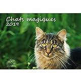 Chat magiques · 42 cm x 29,7 cm · Calendrier 2019 · Chats · Animaux domestiques · Bébé chat · Edition âme magique