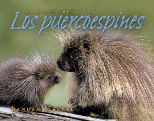 Los puercoespines / Porcupines (Animales Presa / Animal Prey) por Sandra Markle