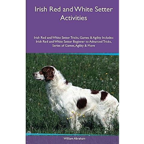 Irish Red and White Setter Activities Irish