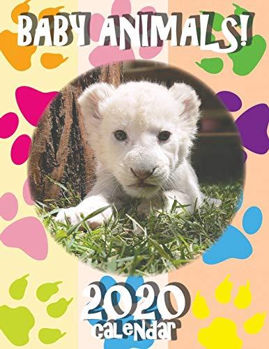 Baby Animals! 2020 Calendar