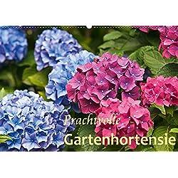 Prachtvolle Gartenhortensie (Wandkalender 2019 DIN A2 quer): Blüten von Hortensien (Monatskalender, 14 Seiten ) (CALVENDO Natur)