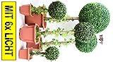 5 x Buchsbäume (5 Stück) Buchsbaum Buchsbaumfamilie grün dunkelgrün KOMPLETT mit Echtholzstamm Holz und Deko Efeuranke + Moos KOMPLETT MIT SOLARBELEUCHTUNG SOLAR LICHT BELEUCHTUNG mit Terracotta Topf Plastik und stabilem Fuß (Zement) Kunstpflanzen stabile Dekobäumchen künstliche Bäume Bäumchen Kugel Buxbaumkugel + Solarlicht LED Lampe 2 Lampen Lichterbaum Balkonsichtschutz Balkon Pflanzen Sichtschutz