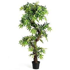 Zimmerpflanze Deko
