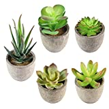 Assorted Decorative Faux Succulent Artificial Succulent Cactus Fake Cacti Plants with Gray Pots For Home Decor (B)