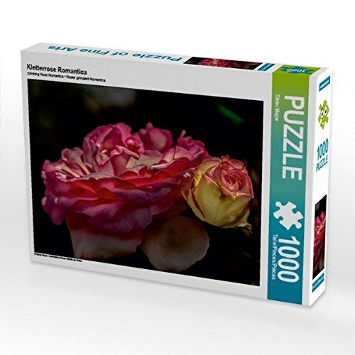 Kletterrose Romantica 1000 Teile Puzzle quer Romantica Rosen