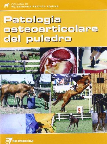 la-patologia-osteoarticolare-del-puledro