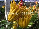 Shopmeeko Freies verschiffen 30 teile/beutel Bonsai jinhua bergamotte pflanze finger-citron bergamot, gemüseanlage für hauspflanze garten