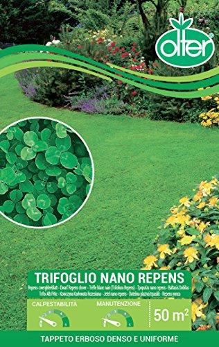 Olter Prato trifoglio nano repens tappeto erboso denso e uniforme 500g