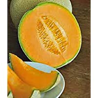 PLAT FIRM SEMILLAS DE GERMINACION: Muskmellon, Edisto 47 Sweet, Heirloom, Organic 100 Seeds, Sweet and Delicious