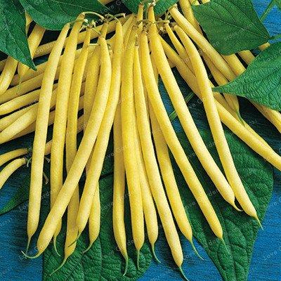 20 pcs / sac de haricots Graines bio délicieux Phaseolus vulgaris plante verte Semences-nutrition Graines de légumes non OGM 1