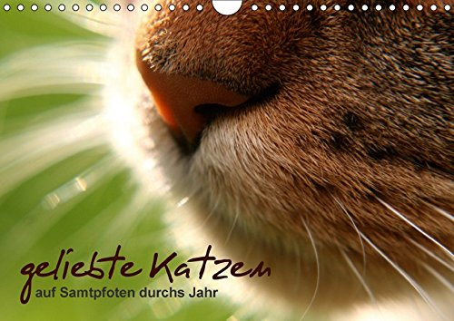 geliebte Katzen - auf Samtpfoten durchs Jahr (Wandkalender 2017 DIN A4 quer): Katzenfotografie (Monatskalender, 14 Seiten) por Isabel Schöne