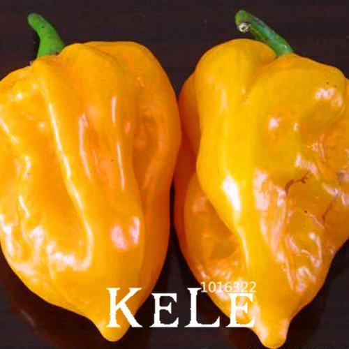 Inde diable Hot Chili Patio Jardin Pot Vert Organique vegetable Seeds plus de Chile du monde - 100 graines/sac, # jb6nix