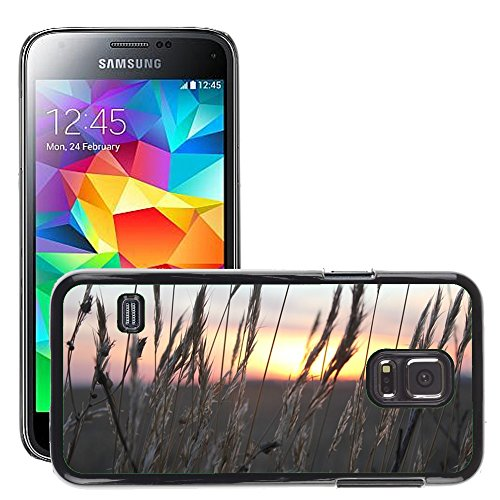 carcasa-funda-case-m00421772-tramonto-wheat-spikes-luce-samsung-galaxy-s5-mini-sm-g800