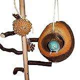 Einzigartige Vogelschaukel aus Kokosnuss mit Fruchtschale zum Knabbern - 5