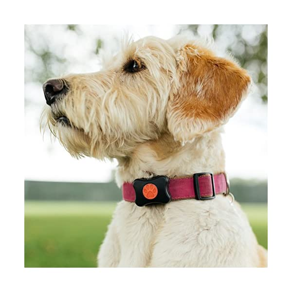 PitPat Dog Activity Monitor (Old Version - 2016 - No Distance Feature) 1