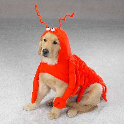 Artikelbild: Halloween Pet Dog Costume Lobster Paws Medium