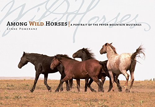 Wild Horse Mustang (Among Wild Horses: A Portrait of the Pryor Mountain Mustangs)
