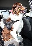 Sicherheitsgurt Hund ausziehbar / Auto Sicherheitsgeschirr für mittlere und große Hunde / Hunde Anschnallgurt - 5
