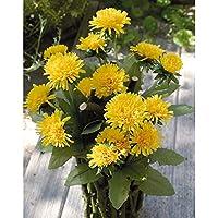 Pissenlit taraxacum artificiel PETRA dans une corbeille en bois, fleurs jaunes, 45 cm - Fausse fleur / Fleur artificielle - artplants