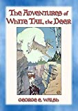 Best Puma Challenges - THE ADVENTURES OF WHITE TAIL THE DEER Review