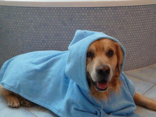 hundeinfo24.de Hunde Bademantel – Badeponcho Groesse M Rueckenlaenge 55 cm